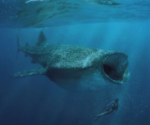 amazing, incredible, and whale image