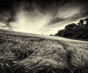 b&w, black and white, and meadow image