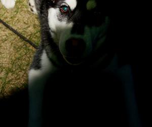 animal, dog, and eye image