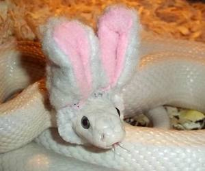 snake, bunny, and rabbit image