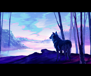 sky and wolf image