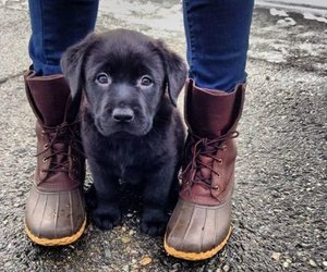 labradors are the best image
