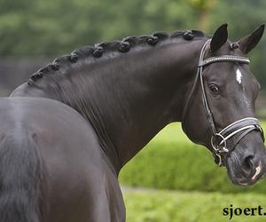 amazing, stallion, and totilas image