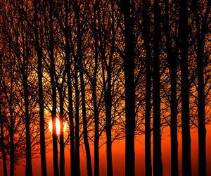 tree, orange, and sun image