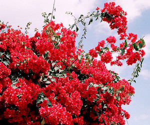 flowers, red, and sky image