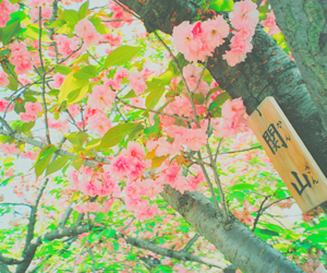 japan, tree, and flowers image