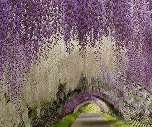 flowers, japan, and purple image
