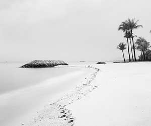 beach, black and white, and sea image