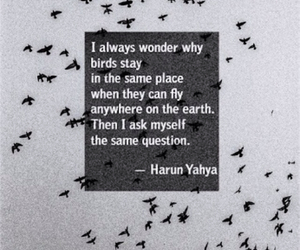 bird, quotes, and fly image