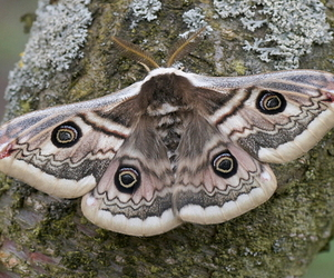 moth and nature image