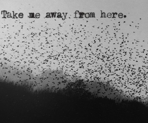 bird, away, and quote image