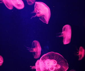 pink, jellyfish, and amazing image