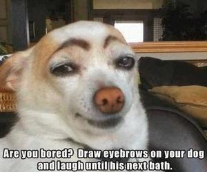 funny, dog, and eyebrows image