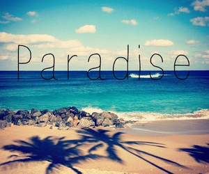 beach, palmtree, and paradise image