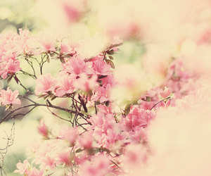 floral and cream pink image