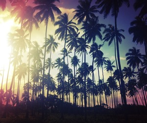 palms, summer, and sun image