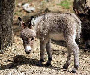 adorable, animals, and donkey image