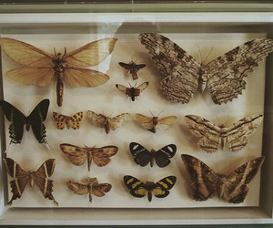 1800's, butterfly, and indie image