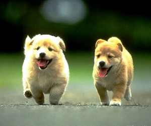 dogs, little, and cute image