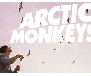 alex turner, arctic monkeys, and birds image