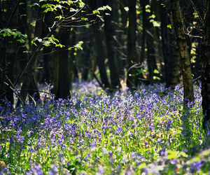 bluebell, tree, and green image
