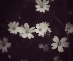 flowers, black and white, and dark image