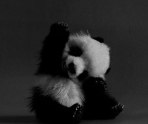 adorable, baby animal, and black and white image
