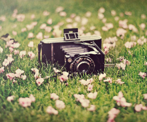 camera, photography, and grass image