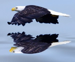 animal, Flying, and nature image
