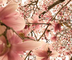 blossom, photography, and flower image