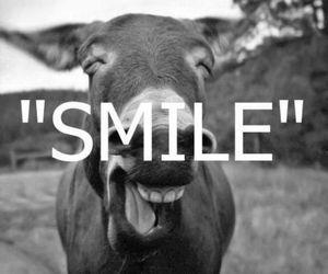 smile, funny, and donkey image