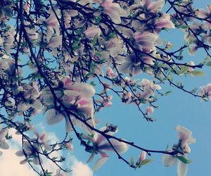 flowers, beautiful, and sky image