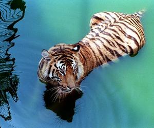 animal, love, and beautiful image