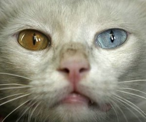 cat, color, and eyes image