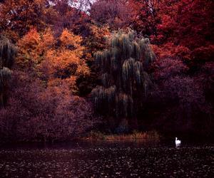 lake, autumn, and nature image