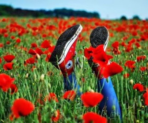 converse, red, and flowers image