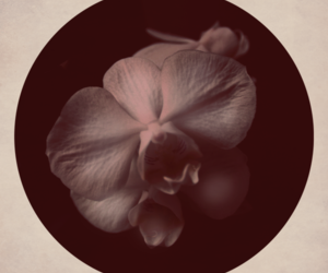 orchid and retro image