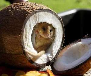animal, cute, and coconut image