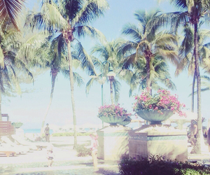 beach, Caribbean, and palm trees image