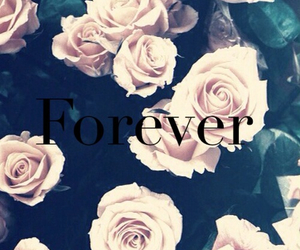 forever, flowers, and rose image