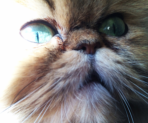 beautiful eyes, love cats, and cat image