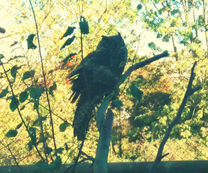 beatiful, bird, and lovely image