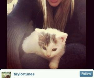 adorable, cat, and Taylor Swift image