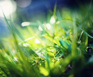 grass, spring, and green image