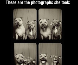 adorable, dogs, and funny image