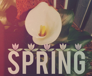 flower, spring, and love image