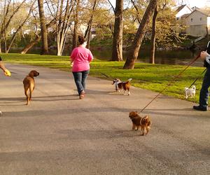 dogs, park, and pekingese image