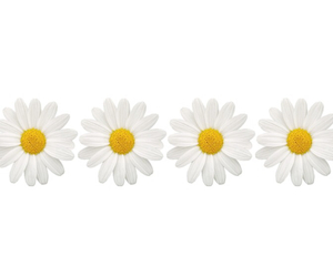 flowers, overlay, and daisy image