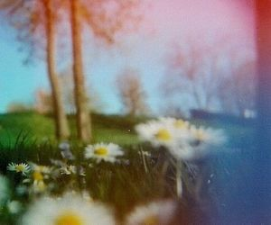 film, nature, and spring image
