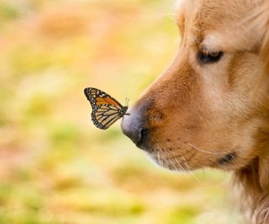 dog, butterfly, and animal image